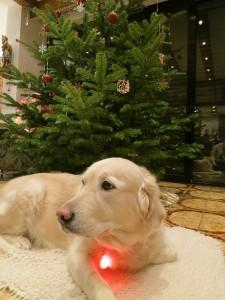 Ronja Weihnachten 2013